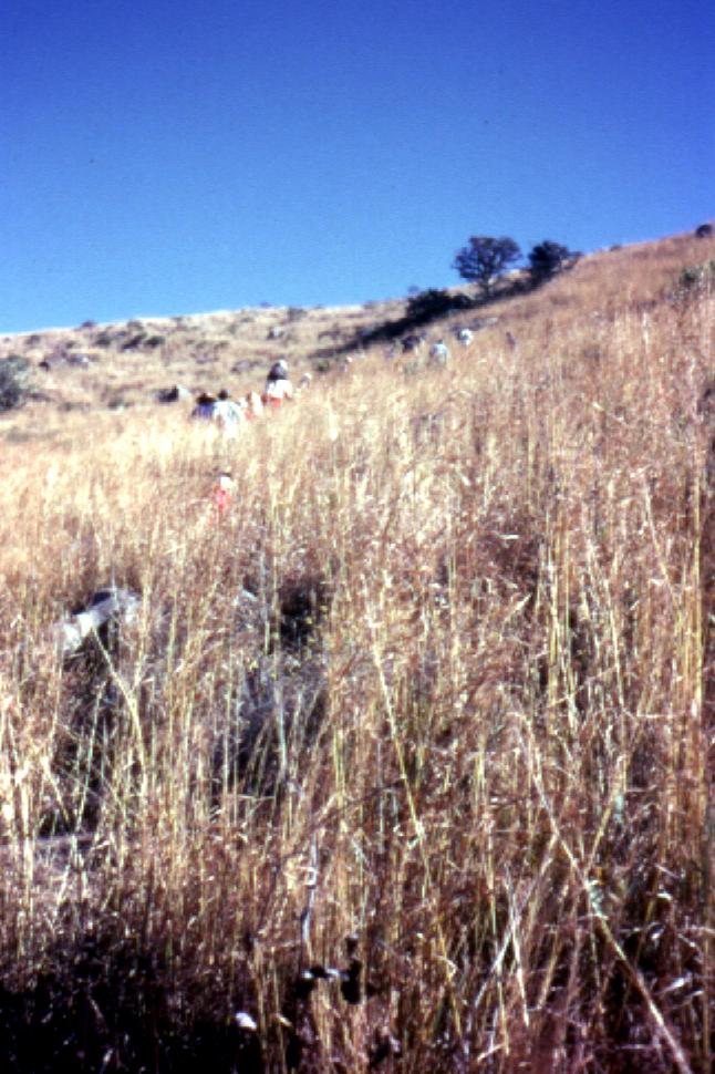 SAMHS members and kids struggle to climb up
