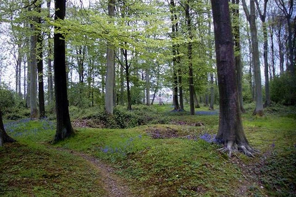 Beautiful Delville Wood today, with the trenches still evident