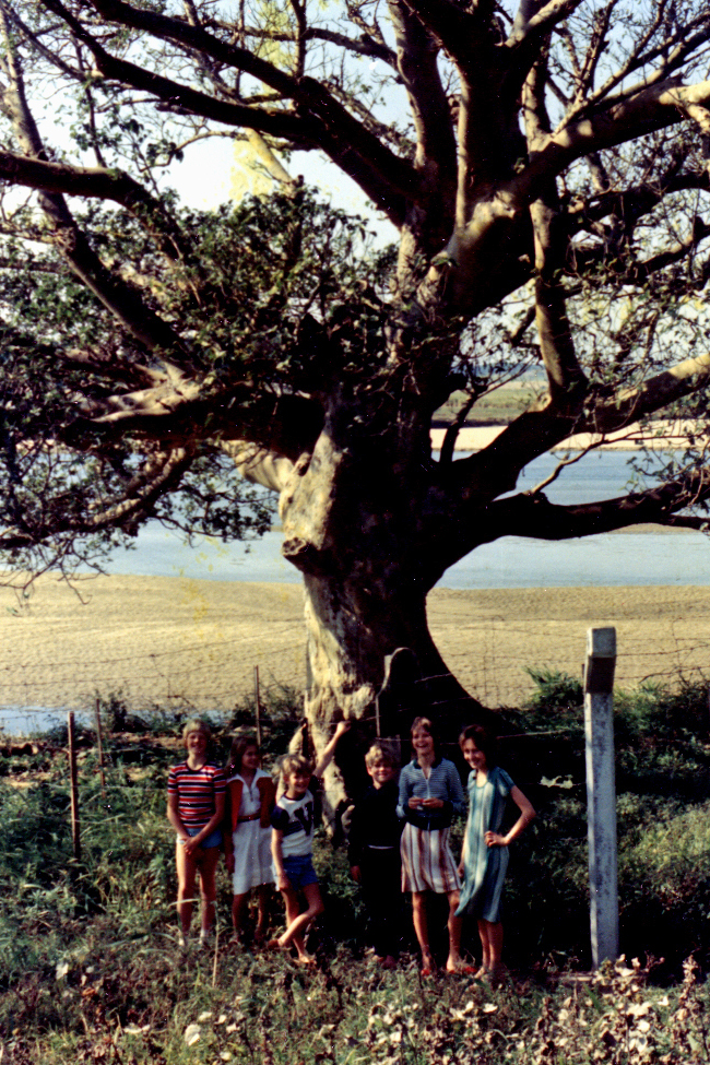 "The ""ultimatum tree"", 1978"
